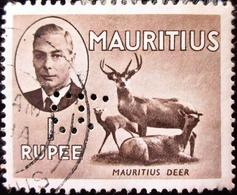 1950 Ile Maurice  . Mauritius Yt 236 . Javan Rusa (Cervus Timorensis) . Perforé R - Mauritius (...-1967)