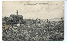 Récolte Du GOEMON - PERROS - Belle Carte - Métier De La Mer - VENTE DIRECTE X - Paysans