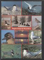 Vogels Langs De Noordzee -   Used - See The 2 Scans For Condition( Originaal) - Oiseaux