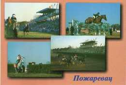 Horses - Sports - Horse Show - Pozarevac - Serbia - Hippisme