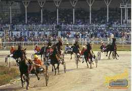 Horses - Sports - Horse Show - Hippodrome -Belgrade - Serbia - Hippisme