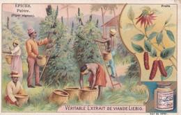 """Vers 1895 Extrait De Viande Liebig : """"Epices,poivre,fruits"""" ,cultivés En Inde,Sumatra , à Borneo - Liebig"""