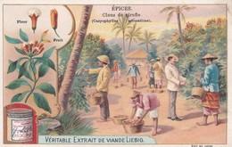 """Vers 1895 Extrait De Viande Liebig : """"Epices,clous De Girofle"""" ,cultivés En Guyane,Brésil ,Inde Sumatra - Liebig"""