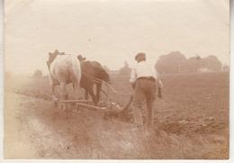 Thilouze - Laboureur - 1915 - Photo Format 6.5 X 9 Cm - Personnes Anonymes