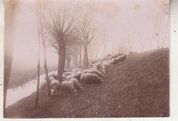 Dijk - Vlassenbroeck - Schapen - 1895 - Foto Formaat 8 X 11 Cm - Lieux