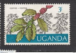Uganda, Ouganda, Café, Coffee - Alimentation