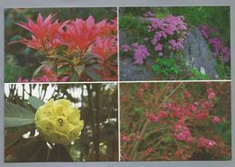 IE. IERLAND. IRELAND. PLANTS AT ILNACULLIN. Pieris Formosa Forrestii. Rhododendron Sinogrande - Bloemen