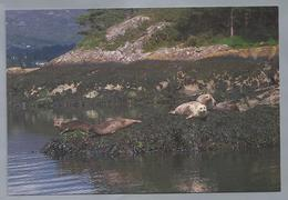 IE. IERLAND. IRELAND. ILNACULLIN - GARINISH ISLAND, Co. CORK. Seals. Robben. Zeehonden. - Animaux & Faune