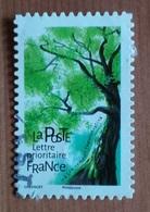 Hêtre Commun (Arbre) - France - 2018 - France