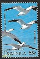 Dominica - 1995 - MNH -  Snow Goose -   Anser Caerulescens - Oies