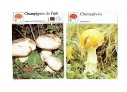 Lot 2 - Fiche Illustree  Champignon De Paris - - Collections