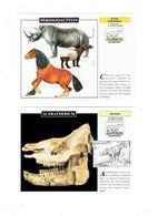 Lot 2 - Fiche Illustree  - RHINOCEROS - Périssodactyles Cheval Tapir Aceratherium - Animaux