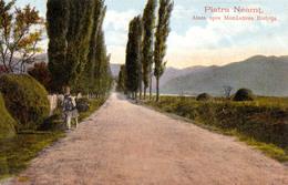 PIATRA NEAMT : ALEEA SPRE MONASTIREA BISTRITA / THE ALLEY TO BISTRITZA MONASTERY ~ 1905 - '910 (aa555) - Romania