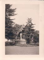 Foto Photo (7 X 9,5 Cm) Tervuren Park Standbeeld Olifant - Tervuren