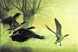 1048. BUZIN. BERNACHES DU CANADA - 1985-.. Oiseaux (Buzin)