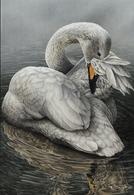1051. BUZIN. CYGNE CHANTEUR - 1985-.. Oiseaux (Buzin)
