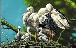 1053. BUZIN. CIGOGNES BLANCHES - 1985-.. Oiseaux (Buzin)