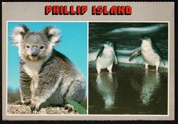 Phillip Island / Victoria  -  Koala / Fairy Penguins  -  Ansichtskarte Ca. 1991   (9840) - Australia