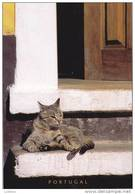 Portugal Cat Cats Chat Chats ( 2 Scans ) - Chats
