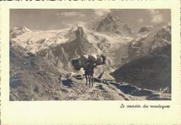 Ane Chargé Le Coursier Des Montagnes CPM Ou CPSM - Anes