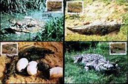 VENDA, 1992,Crocodil Farm,  Mint Maxicards, Nr(s.) 102-105 - Venda