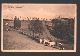 Kwaremont - Eene Quaremonsche Weide / Une Pâture à Quaremont - Koe / Vache / Cow / Kuh - 1933 - Kluisbergen