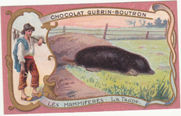 Chromo - Chocolat Guérin Boutron - Les Mammifères - La Taupe - Guérin-Boutron