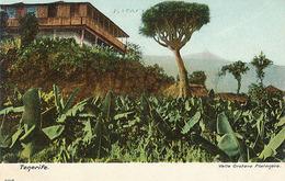 TENERIFE - N° 4148 - VALLE OROTAVA PLATANERA - Tenerife