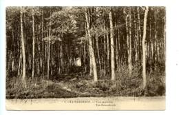 Kapellen - Kapellenhof - Une Sapinière - Een Dennebosch / Henri Georges 1 - Kapellen