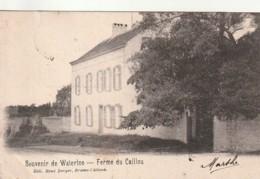 ** *  Souvenir De WATERLOO  Ferme Du Caillou Timbrée - Precurseur TTB - Waterloo