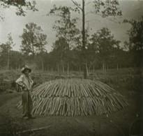 Positif Stéréo . Forêt De Meillant (Cher). Fabrication De Charbon De Bois . - Photos Stéréoscopiques