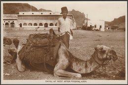 Camel At Rest After Feeding, Aden, C.1920s - Benghiat RP Postcard - Yemen