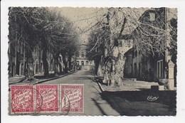 CPSM 83 LORGUES Avenue Allongues - Lorgues
