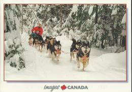 """Une Balade En Traîneau-à-chiens - Photo G. Pouloit - Timbre Auto-adhésif De 2005 """"149"""" - Canada"""