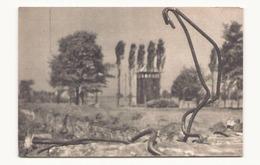 POLOGNE BRZEZINKA BIRKENAU VUE SUR LES RUINES ET L ENTOURAGE DES CHAMBRES A GAZ ET DU CREMATOIRE II - Pologne