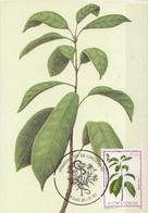 717 S. Tomé E Principe 1983 Medicinal Plants Maximum Card Buchholzia Coriacea Piante Medicinali Maxi - Sao Tomé E Principe