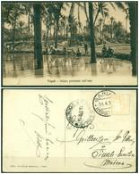 CARTOLINA - V8647 COLONIE ITALIANE TRIPOLITANIA 1914 Cartolina Illustrata (Tripoli Veduta Pittoresca Nell'oasi) - Libia