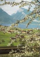 SPIEZ Am Thunersee Bahn SBB Bern-Lötschberg-Brig-Lausanne - BE Berne