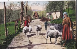 AR09 Costumi Del Lago Magiore - Sheep - Verbania