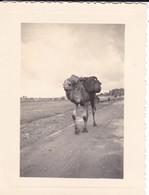 MINI PHOTO--MAROC---MARRAKECH--un Sympattique Chameau---voir 2 Scans - Africa