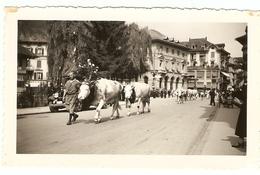 """SUISSE - ( INTERLAKEN ) Lauréates Du Concours De Beauté """" Vaches Laitières """" Rue Principale( Photo: Format 12 X 7.5 ) - Lieux"""