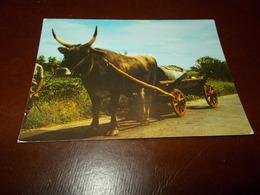 B713  Boskarin (bovino) Viaggiata - Animali