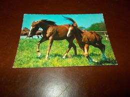 B713  Cavalli Non Viaggiata - Cavalli
