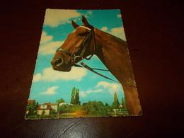 B713  Cavallo Non Viaggiata Macchioline Umido - Cavalli