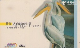 TARJETA TELEFONICA DE CHINA. PELICANOS - PELICANS. GXDCBGG-2003-1(8-6). (669). - Pájaros