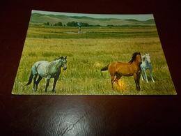 B713  Cavalli Non Viaggiata - Caballos