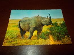 B713  Rinoceronte Non Viaggiata - Animali