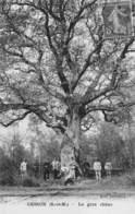 A-19-2475 :  TROGNE. TROGNES. ARBRE REMARQUABLE.CESSON SEINE ET MARNE. LE GROS CHENE. GARDE FORESTIER ? - Trees
