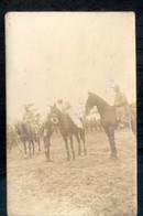 Onbekend - Berveloo? - Beringen - Paarden - 1920 - Fotokaart - Beringen