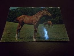 B713  Cavallo Viaggiata - Cavalli